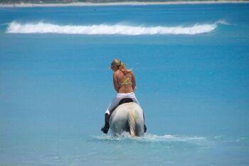 Horse, Noordhoek Beach, Cape Town